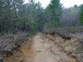 Bear Trail whe