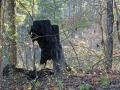 Im Wald1 sab