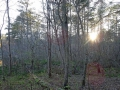 Im Wald6 sab