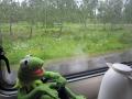 Kermit im Regen sab