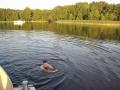 Wolf schwimmt sab_bearbeitet-1