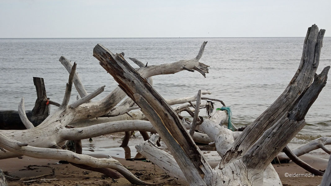Bäume am Strand sab