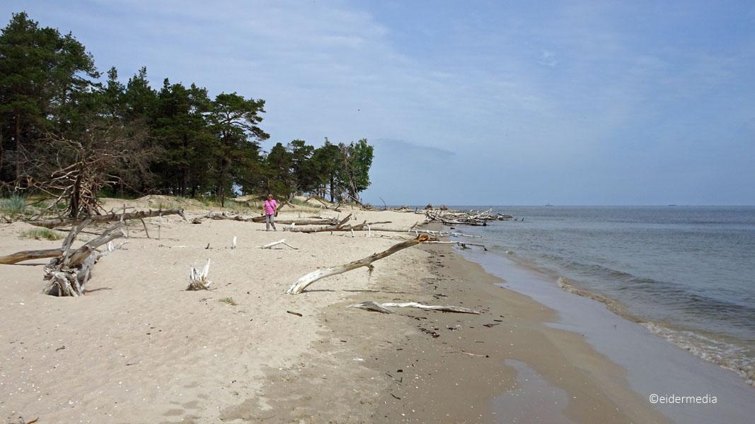 Sab am Strand whe_bearbeitet-1