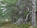 Abgestorbener Baum whe