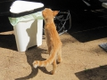 Katze zu Besuch sab