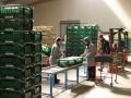 Gemüsebearbeitung Marne whe_bearbeitet-1