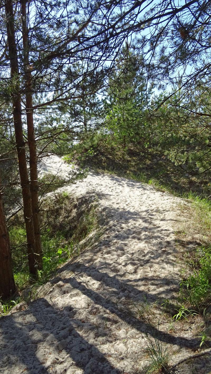 Weg zum Strand whe_bearbeitet-1