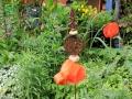 Die Blumenwiese darf wachsen sabof