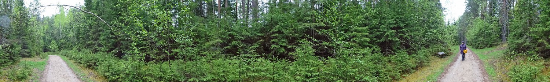 Der Waldweg zu Erglu Klintis