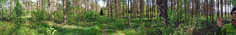 Dichter Wald rundum und nur zweihundert Meter bis zur Gauja