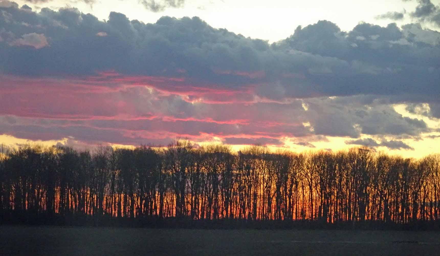 Sonnenuntergang Wald sab_bearbeitet-1of