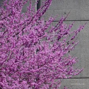•Baum 1 = Wie gut kennt ihr die Natur in Amerika? Was meint ihr, ist das? Ich habe lange gerätselt und darum ein kleines Quiz vorbereitet. Die Auflösungen zu den Bildern findet ihr am Ende des Textes.