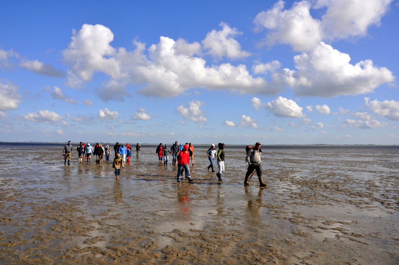 Geführte Wanderung im Wattenmeer.