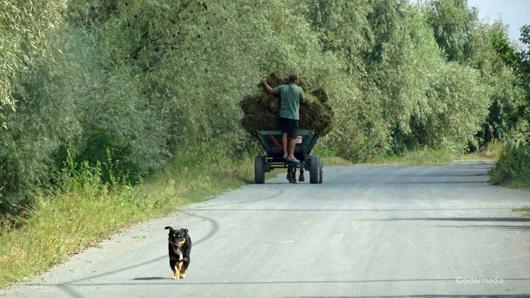 Fuhrwerk und Hund sab