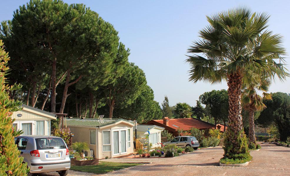 Calico Park sab